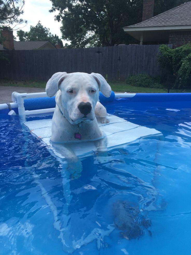 Above ground pool platform for my Dogo Argentino