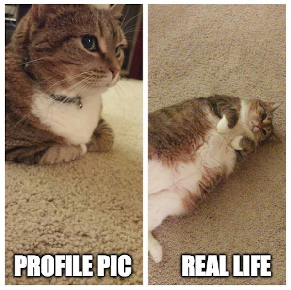 Profile Pic - VS - Real Life (Funny Animal Pictures) - #difference #profile pic #real life