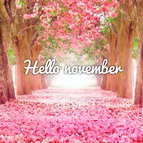 HELLO NOVEMBER! Don't miss out on our awesome year end packages... visit our website for more details... #November