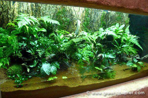Mejores 157 im genes de vivariums paludarios y terrarios for Vivero para peces