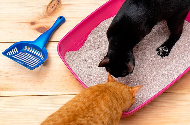 6 Tips Básicos Para Eliminar El Olor A Orina De Gato Cocina Vital Qué Cocinar Hoy Orina De Gato Olores De Orina De Gato Eliminar Olor A Orina De Gato