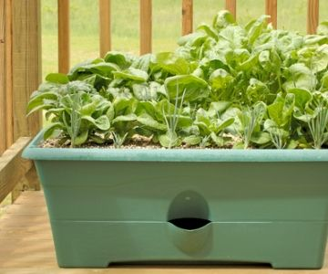 Great tips on fall vegetables to grow on an apartment balcony depending on how much sunlight you get!