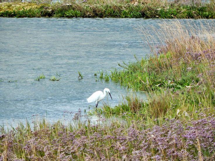 Laguna di #Cavallino-Treporti