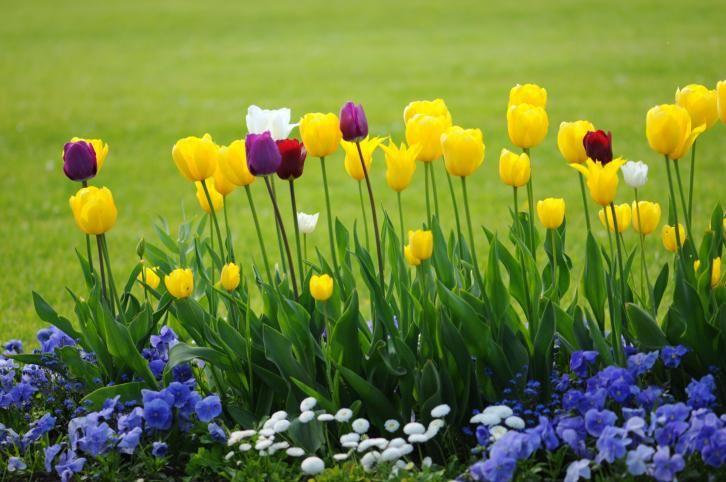 Znalezione Obrazy Dla Zapytania Wiosna Kwiaty Floral Arch Floral Flowers