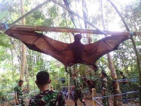 Peruvian army captured a human size bat.