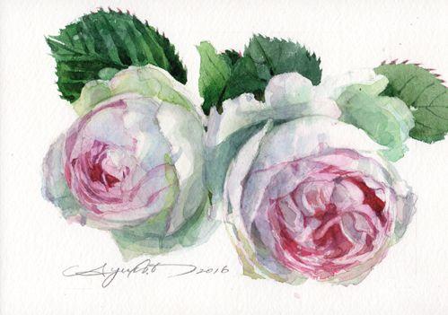 ピエール・ド・ロンサールの描き方|柘植彩子の透明水彩テクニカルレッスン