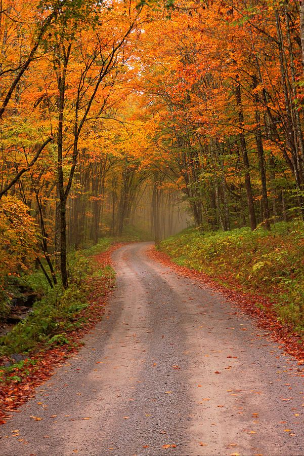 ✯ Deep Autumn Forest Road