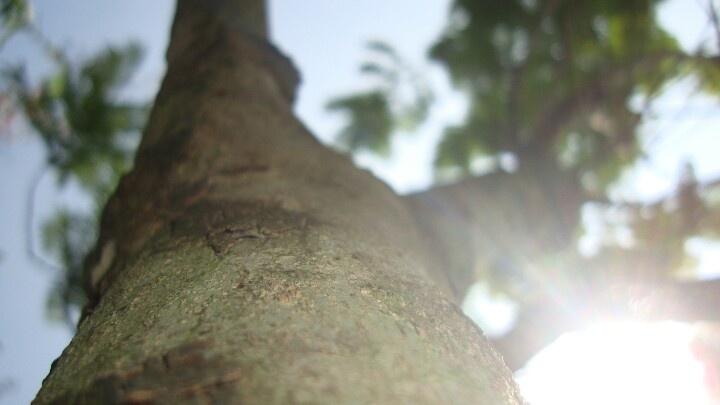 under sunlight