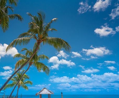 Florida Keys Laid Back Living - Buy The Right Palm Tree at The Palm Trees Store #RealPalmTrees #BuyPalms #BuyPalmTrees #PalmStore #FloridaPalmTrees