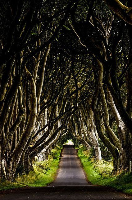 Dark Hedges, Ireland.: Cool Places In Ireland, Buckets Lists, Dark Hedges Ireland, Favorite Places, Amazing Driveways Paths, Places I D, Northern Ireland, Roads, Cool Places To Visit