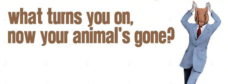 Suede - Animal Nitrate Facebook Cover