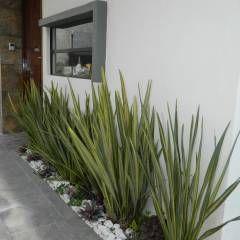Real de Palmas 01 : Jardines de estilo moderno por ECNarquitectura