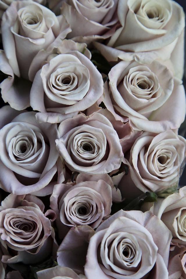 Earl Grey Roses Flowers Grey Flowers Flower Aesthetic