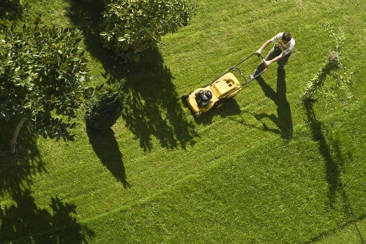 Mow Lawns Types of lawn, Mowing services, Grass clippings