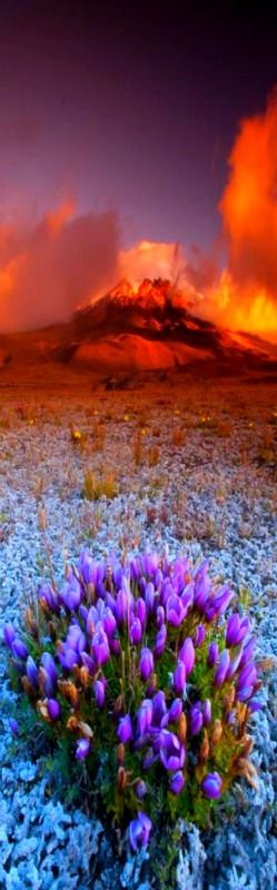 """kevwil: Cotopaxi National Park in Equidor """"Cotopaxi Sunset"""" by fernandosalas…"""