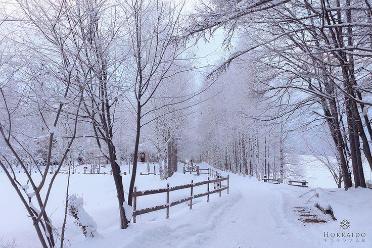 Canon單眼相機 - [旅記] 北海道:奇幻的雪國之旅 - 相機討論區 - Mobile01