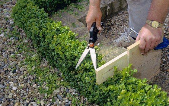 Pro tvarování nízkého živého plotu či lemu u záhonů si můžete vyrobit