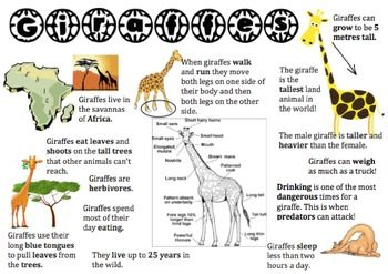 I used this giraffe information placemat to support my lower readers when sourcing information for a report on giraffes. It's really handy if you can't get your hands on low texts.