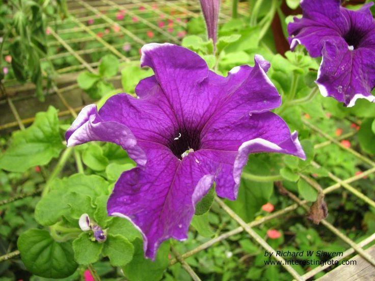 Garden Plants Flowers Philippines 25812 garden flowers names