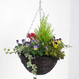 Winter hanging basket - goldcrest, pansies, cyclamen, ivy  Google Image Result for http://www.plantsgaloreonline.co.uk/images/products/items/large/286_seasonalhangingbasket300.jpg