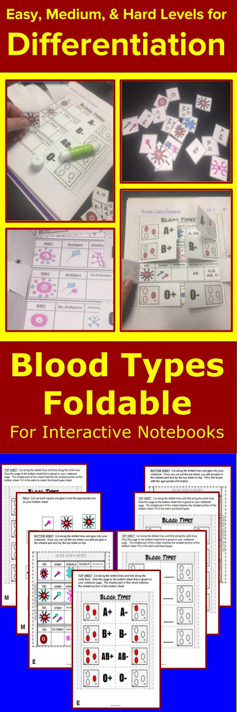 Blood Types Foldable for Interactive Notebooks