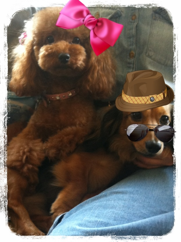 My sweet dogs♡
