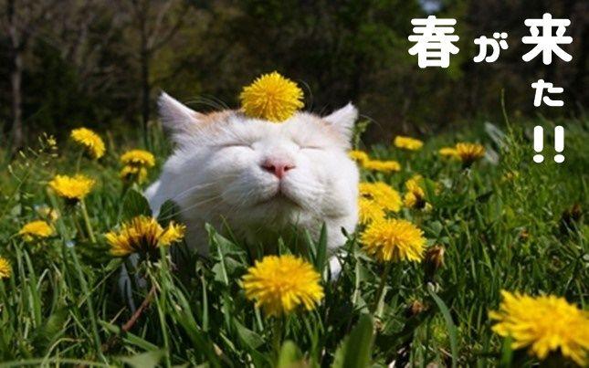 猫とモフモフはきっても切り離せない関係。 そして人はモフモフな猫を見ると、モフらずにはいられないという習性をもっている。(人によるが) 今回は目の前に現れたらきっとモフモフせずにはいられないであろう猫たちの画像まとめです。  奇跡のモフモフ具合。参照:image.excite.co.jp 何ということでしょうか、小さな小さな子猫の後ろ姿がまるでモフモフボールかのように丸くふわふわ、わたあめのような(^q^)   お腹をモフモフ顔を埋めたい!参照:up.gc-img.net これはかなり美しいモフモフ猫さんです、真っ白なキャンパスを顔という筆で埋めたい。  可愛すぎるんです(T_T)参照:pinimg.com ファーーーーーーーー!これぞモフモフの天使、光のせいか、もうかなり神々しい状態に!!  たわしのようなモフモフ猫。参照:lacarmina.com たわしというとゴワゴワなので若干語弊がありますがフワフワモフモフボディな猫さんです。  お尻をモフりたい!!参照:lacarmina.com 毛づくろい中の魅惑のバックショット、お尻ペンペンしたりモフモフしたりしたいんです!…