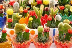 Cacto Miniatura En Plantadores Coloridos - Descarga De Over 62 Millones de fotos de alta calidad e imágenes Vectores% ee%. Inscríbete GRATIS hoy. Imagen: 4584096