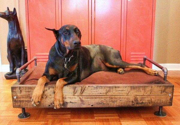 Give that dawg of yours some custom sleep space. A few old boards,  some left over piping and flanges and a great pillow.......D.