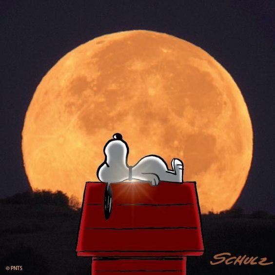 Snoopy relaxing by the light of the moon: