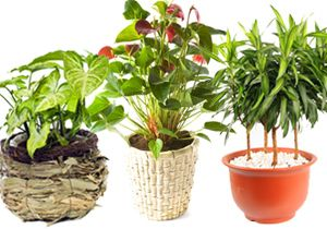 20 plantas para ambientes fechados