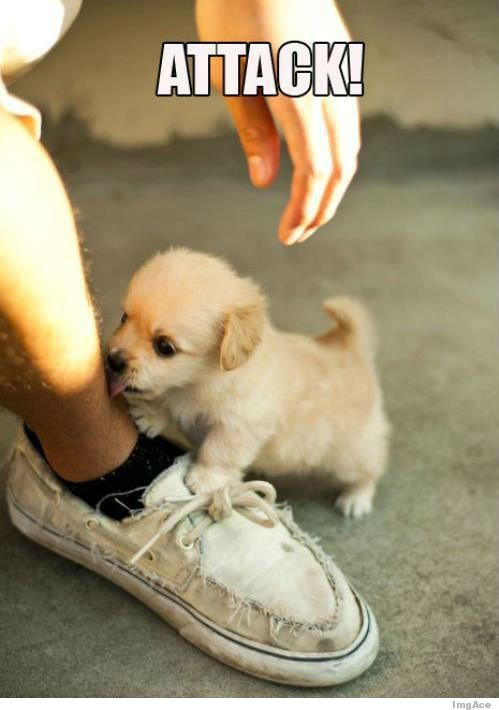 Here is a #PuppyBreak for those who attacked Monday without fear!