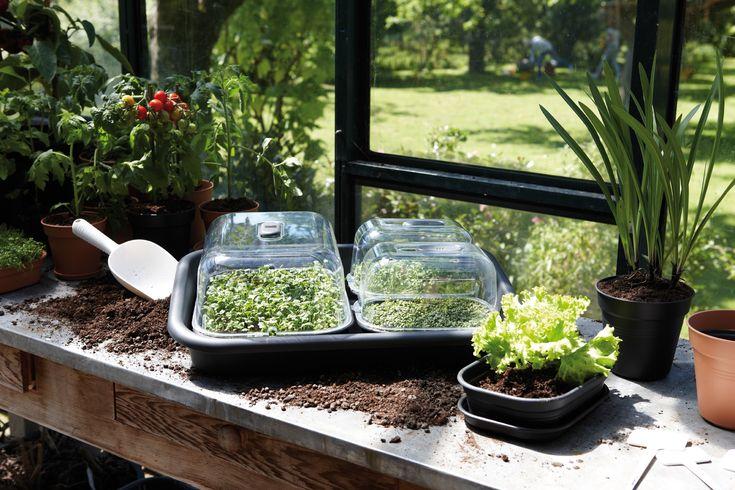 Wiosenne porządki w ogródku. Od czego zacząć? - Inspirowani Naturą