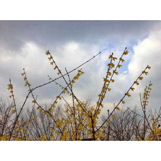 "Korean flower ""gaenari"""