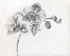 Black and grey orchid tattoo | Tattoos at Repinned.net