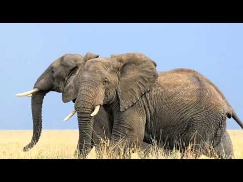 5 Fun Facts About Elephants