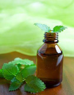 Aceite de menta como repelente de insectos.