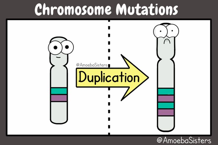 Chromosome mutations in a GIF! Check out all our science GIFs here!