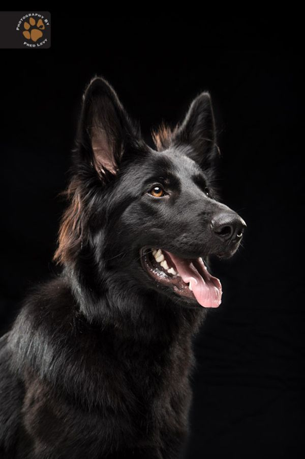 """Pix We Love: Amazing """"Black Dogs Project"""" Explores Black Dog Syndrome - Dogster"""