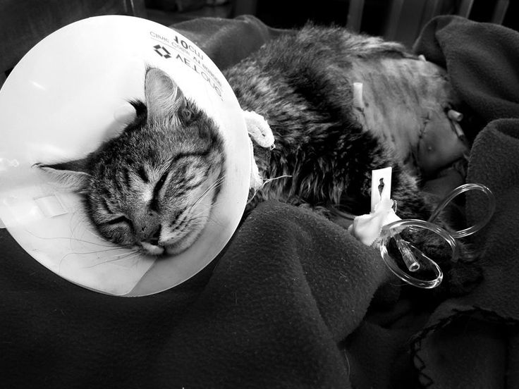 My cat's fight back to health after she was attacked by a dog.... http://ift.tt/2uRKQBL