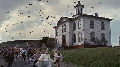 Cientos de cuervos llegan a beber a su piscina. Luego este hombre se arrepiente de abrir la ventana