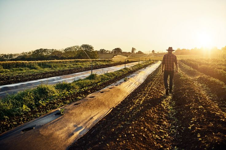 The 8 Lessons Entrepreneurs Could Learn From Farmers https://www.entrepreneur.com/article/294731