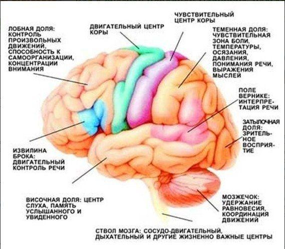 Тренируем мозг с помощью физических упражнений !