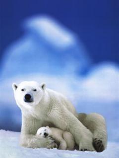 toda clase de animales exoticos y bellos del mundo