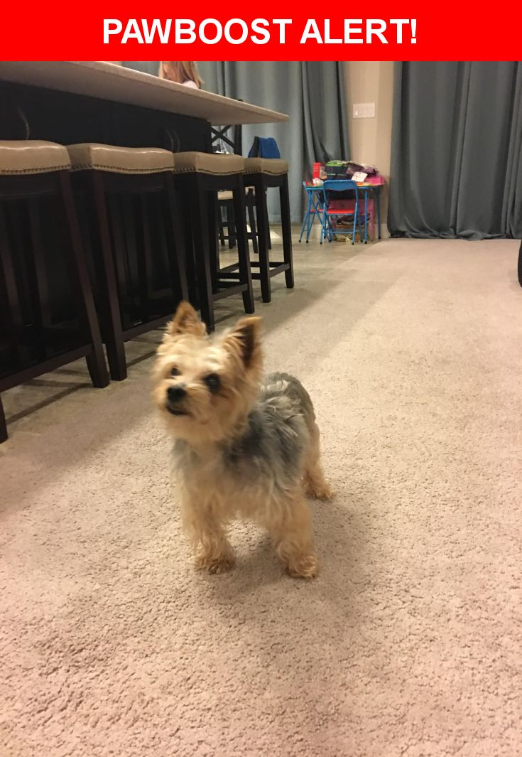 Is this your lost pet? Found in Lithia, FL 33547. Please spread the word so we can find the owner!    Nearest Address: Watercolor Drive, Lithia, FL, United States