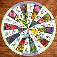 Garden Plans: Perennials - Garden Planning Tool