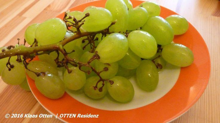 Gewoon saampjes aan de #druif op een zonnige dag in #DenHelder @OTTEN Residenz! 😃 #gewoonomdathetkan! 😉