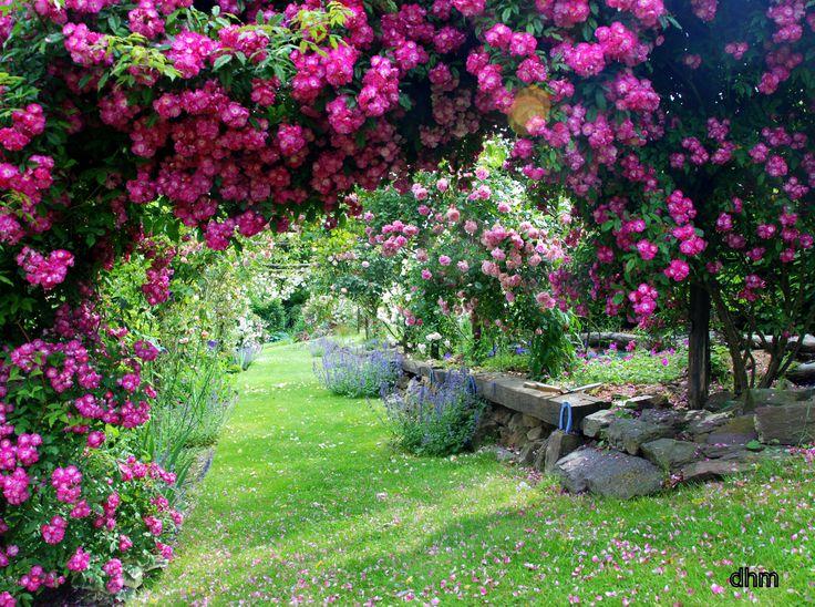 Jardins fleuris recherche google au jardin pinterest for Google jardin