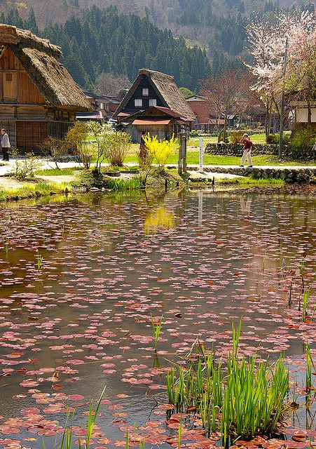 The World Heritage - Shirakawa-go, Gifu, Japan.. It is best known for being the site of Shirakawa-gō, a small, traditional village showcasing a style of buildings called gasshō-zukuri.