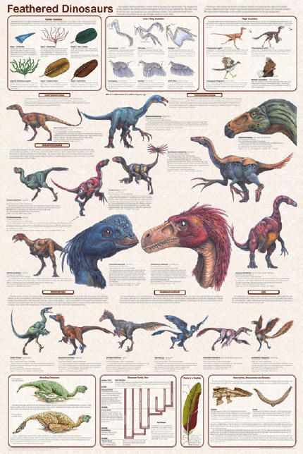 Feathered Dinosaur - A Comprehensive Study